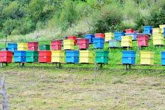 Colmeias coloridas Fotos de Stock