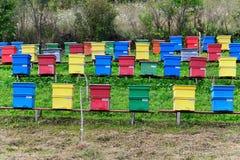 Colmeias coloridas Fotografia de Stock