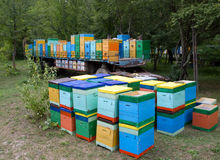 Colmeias móveis do apiário exportadas sob circunstâncias naturais Fotos de Stock Royalty Free