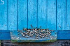Colmeias naturais no verão fotografia de stock