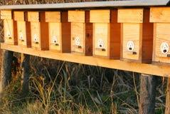 Colmena 2 de la abeja Foto de archivo