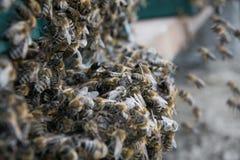Colmena, abeja que vuela para encorchar Las abejas entran en la colmena Imágenes de archivo libres de regalías