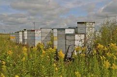 Colmena activa de la abeja Imágenes de archivo libres de regalías