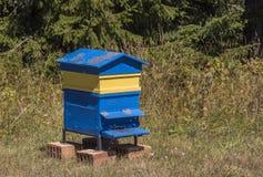 Colmena amarilla y azul de madera de la abeja, colmena Imagen de archivo