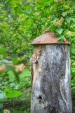 Colmena antigua en el follaje Fotografía de archivo