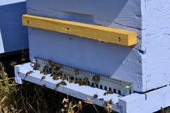 Colmena azul Imagen de archivo libre de regalías
