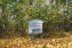 Colmena azul en bosque del otoño foto de archivo