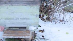 Colmena cerrada para el invierno almacen de metraje de vídeo