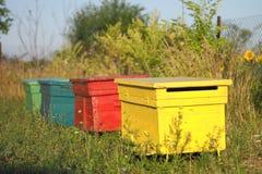 Colmena coloreada de la abeja Fotos de archivo libres de regalías