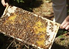 Colmena con la miel Fotografía de archivo