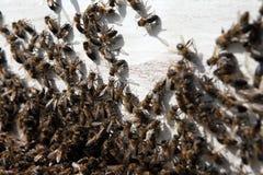 Colmena con las abejas Fotos de archivo libres de regalías