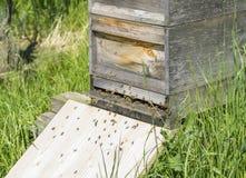 Colmena con las abejas Fotografía de archivo