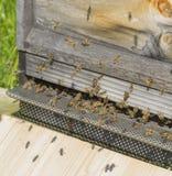 Colmena con las abejas Imagen de archivo libre de regalías