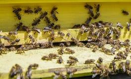 Colmena con las abejas Imagenes de archivo