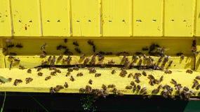 Colmena con las abejas Foto de archivo
