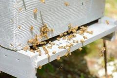 Colmena con las abejas de la colonia Imagen de archivo libre de regalías
