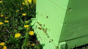 Colmena con las abejas de time lapse metrajes