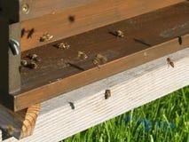Colmena con las abejas del vuelo Imágenes de archivo libres de regalías