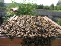Colmena con las colmenas en las cuales hay porción de abejas Foto de archivo