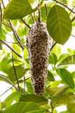 Colmena de abejas Imagen de archivo libre de regalías