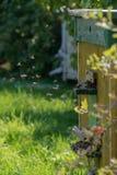 Colmena de abejas en el área suburbana Las abejas vuelan en la colmena Fotos de archivo