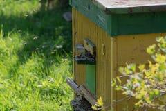 Colmena de abejas en el área suburbana Las abejas vuelan en la colmena Imagen de archivo