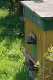 Colmena de abejas en el área suburbana Las abejas vuelan en la colmena Foto de archivo