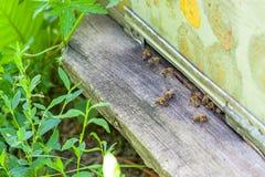 Colmena de Dadan con las abejas en el colmenar en el jardín Imagenes de archivo