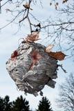 Colmena de la abeja Imagen de archivo