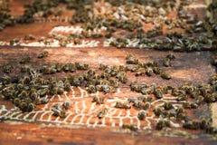 Colmena de la abeja Imagenes de archivo