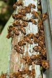Colmena de la abeja Foto de archivo