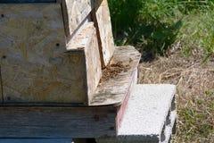 Colmena de la abeja Fotos de archivo