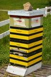Colmena de la abeja Imágenes de archivo libres de regalías