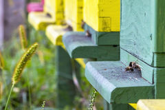 Colmena de la abeja Fotografía de archivo libre de regalías