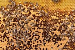 Colmena de la abeja Fotografía de archivo