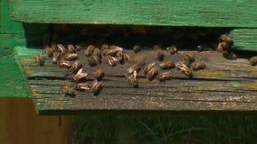 Colmena de la abeja. Abejas en la entrada a la colmena. Recoja la miel metrajes