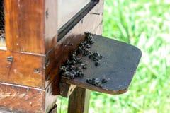 Colmena de la abeja, colonia de la abeja, producción de la miel, miel, el trabajo de abejas Imágenes de archivo libres de regalías