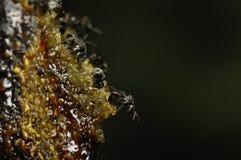 Colmena de la abeja con la miel Imagen de archivo libre de regalías