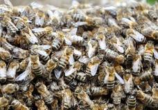Colmena de la abeja con las abejas Foto de archivo