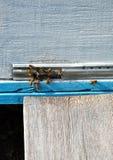 Colmena de la abeja con las abejas Fotos de archivo libres de regalías