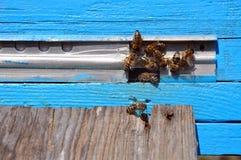 Colmena de la abeja con las abejas Imagenes de archivo
