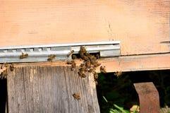 Colmena de la abeja con las abejas en ella Fotografía de archivo libre de regalías
