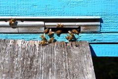 Colmena de la abeja con las abejas en ella Fotografía de archivo