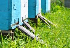 Colmena de la abeja con las abejas en ella Imagen de archivo