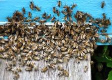 Colmena de la abeja con las abejas en ella Imagen de archivo libre de regalías