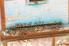 Colmena de la abeja con las abejas en naturaleza Foto de archivo libre de regalías