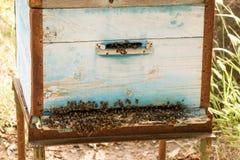 Colmena de la abeja con las abejas en naturaleza Fotos de archivo