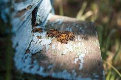 Colmena de la abeja con las abejas de la miel Fotografía de archivo libre de regalías