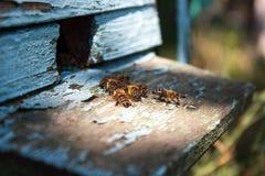 Colmena de la abeja con las abejas de la miel Imágenes de archivo libres de regalías