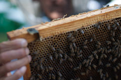 Colmena de la abeja de la miel Imagen de archivo